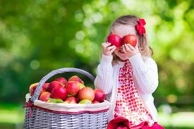 picture of orchard  - Child picking apples on a farm in autumn - JPG