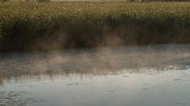 stock photo of cattail  - On a cool summer morning foggy mist rises from the calm water of a wetlands catching the early morning sun - JPG