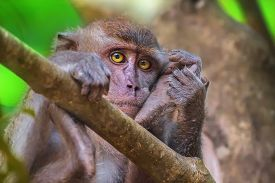 pic of macaque  - Portrait of sad monkey with bright yellow eyes looking in camera - JPG