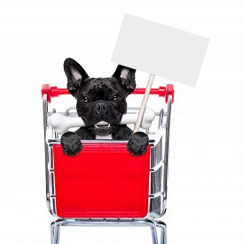 foto of bag-of-dog-food  - french bulldog dog inside a shopping cart trolley behind a blank empty banner holding a placard with a bone in mouth isolated on white background - JPG
