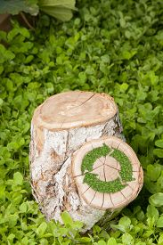 foto of disafforestation  - tree stump on the green grass with recycle symbol - JPG