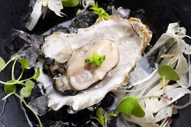 stock photo of oyster shell  - Oyster on the half shell with fennel salad and seaweed - JPG