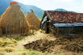 picture of cattle breeding  - Vietnamese village stack of straw food reserve for cattle after crop Vietnam is agriculture country - JPG