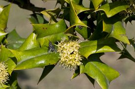 picture of century plant  - A flowering asian barberry plant in the direct sunlight at Century Park in shanghai China - JPG