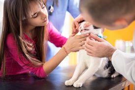 foto of animal teeth  - Vet specialist at work checking cat - JPG