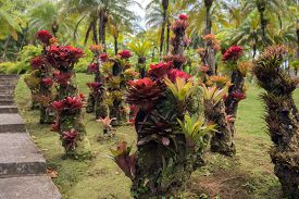 stock photo of bromeliad  - bromeliad plant in the park in Martinique - JPG