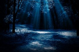 picture of moonlight  - Night forest with moonlight beams - JPG