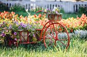 Decorative Retro Vintage Model Old Bicycle Equipped Basket Flowers Garden. Summer Flower Bed With Pe poster