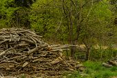 Pile Of Broken Tree Branches And Logs Laying In Wilderness Area On Side Of Mountain. poster