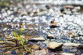 Crystal Clear Water Flowing Over Rocks In A Streams. Streams In The Forest. Nature Background. Selec poster