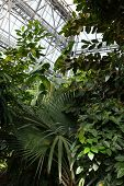 Evergreen Tropical Plants In A Tropical Greenhouse. poster