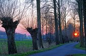 stock photo of damme  - Pollard willows in polder landscape at sunset, Damme, Bruges, Flanders, Belgium, Europe
