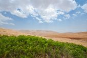 stock photo of samaria  - Green Oasis in Sand Hills of Samaria Israel - JPG