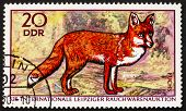 Postage Stamp Gdr 1970 Red Fox, Vulpes Vulpes