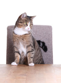 stock photo of snoopy  - snoopy cat on chair on white background - JPG