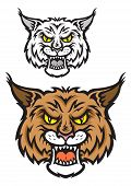 stock photo of bobcat  - Head of lynx or bobcat for sport team mascot design with angry emotions - JPG