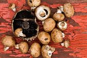 stock photo of agaricus  - Fresh uncooked portobello and brown agaricus mushrooms lying ready to be used in a savory cooking recipe on a grungy wooden board with cracked peeling red paint - JPG