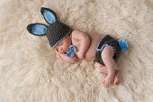 stock photo of bunny costume  - 2 month old newborn baby wearing a gray and blue costume with bunny ears hat bow tie and bunny tail diaper cover - JPG