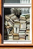 picture of staples  - many books stapled in front of a window - JPG