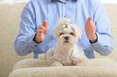 stock photo of qigong  - Man doing Reiki therapy for a dog - JPG