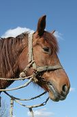 picture of workhorses  - A portrait of a workhorse - JPG