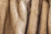 pic of mink  - Product from fur of a pastel mink - JPG