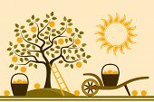 pic of hand-barrow  - vector apple tree - JPG