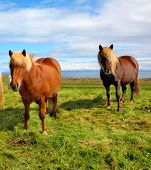 picture of iceland farm  - Summer in Iceland - JPG