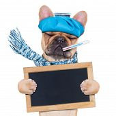 foto of high fever  - french bulldog dog with headache and hangover with ice bag on headthermometer in mouth with high fever eyes closed suffering holding a blackboard isolated on white background - JPG