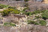 picture of plateau  - Roe deer in a bush in Yeongsil plateau - JPG