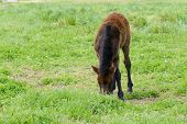 picture of pony  - yoeng pony - JPG