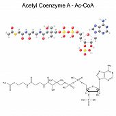 picture of chemical reaction  - Structural chemical formula and model of Acetyl Coenzyme - JPG