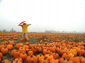 Rainy Day Scarecrow poster