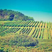 stock photo of bordeaux  - Ripe Black Grapes in the Autumn in Bordeaux France Retro Effect - JPG