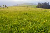 pic of early morning  - Grass with dew on a mountain pasture in the early morning on a background of mountains - JPG