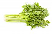 image of celery  - Celery on white background Nutritious and healthy food - JPG