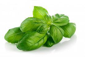 picture of basil leaves  - Fresh green leaf basil - JPG