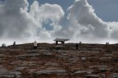 Poulnabrone Dolmen With Tourists poster