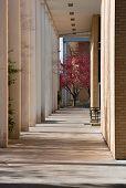 pic of asheville  - University of North Carolina - JPG