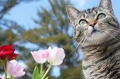 picture of tabby-cat  - Beautiful gray tabby cat among the flowers - JPG