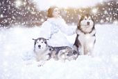 Snow-queen. Fairy Tale Girl With Huskies Or Malamute. Beautiful Snow Queen Witn Dogs. Christmas poster