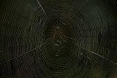 foto of spider web  - spiders web in the dark - JPG