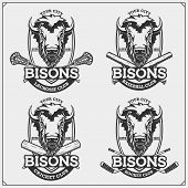 Cricket, Baseball, Lacrosse And Hockey Logos And Labels. Sport Club Emblems With Bison. Print Design poster
