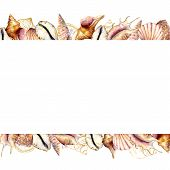 Watercolor Banner With Shells. Hand Painted Golden Sea Shells Border Isolated On White Background. N poster