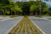 Bricks And Grass In Concrete Walkway poster