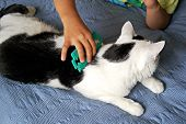 The Boy Is Combing A Black And White Cat With A Green Comb. Pet Care Concept poster