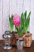 Houseplants in pots with decorative lantern on table on wooden background