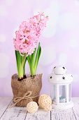 Pink hyacinth in pot with decorative lantern on table on bright background