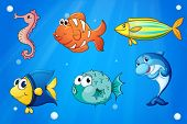Illustration of the colorful sea creatures
