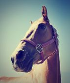 foto of bridle  - a horse - JPG
